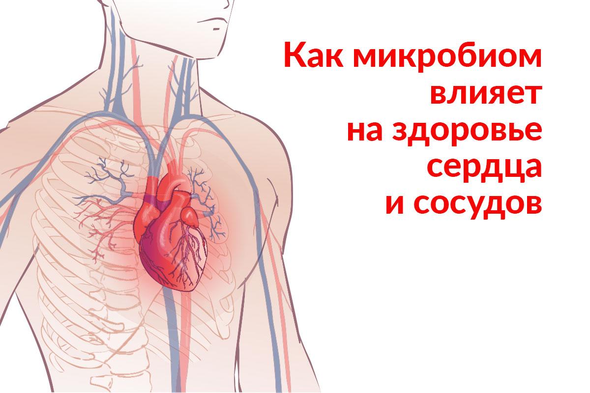 Влияние микробиома на сердце и сосуды человека