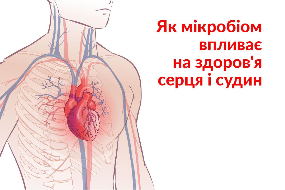 Вплив мікробіома на серце і судини людини